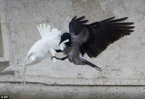 Vatican Crow Attack